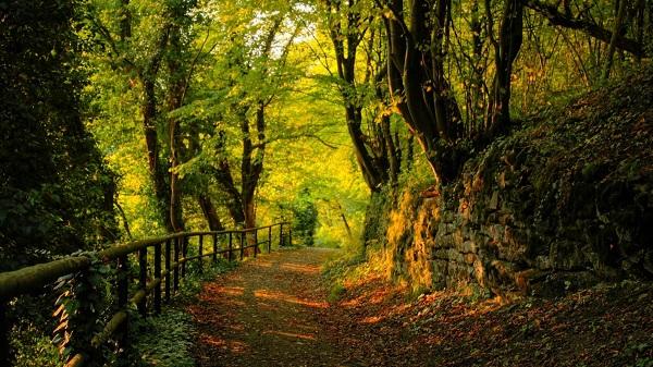 картина Дорога в лесу.