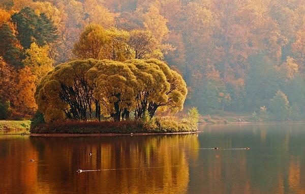 картина Осенний островок